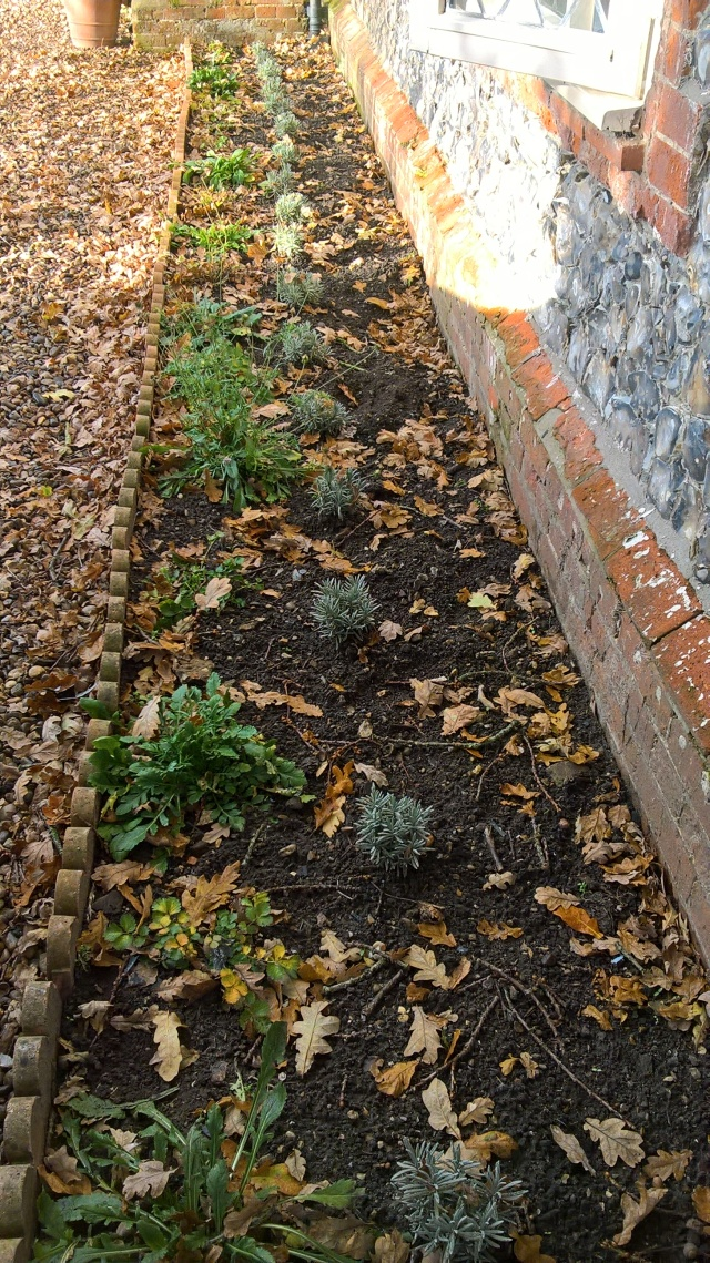 The front border planted up and edging levelled