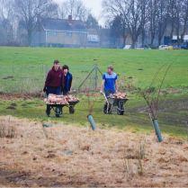 Soils and soil improvement | Old School Garden