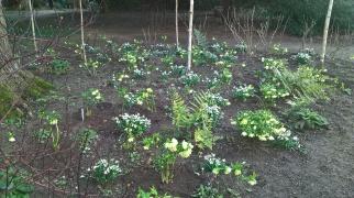 Planting in the Orangery Garden...