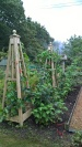 Some runner beans and new area of autumn raspberries plus gooseberries...