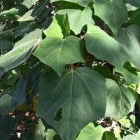 Aussie Greens: #2- Williamstown Botanic Garden