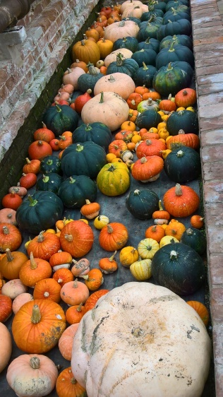 Blickling's squashes and gourds pictured earlier this year...