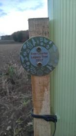 ...four Hornbeams planted along an historic path