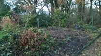 A work in progress..old raspberry bed being cleared and blackberry relocated...