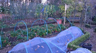 .. fruit bushes pruned and hardy annuals sown...