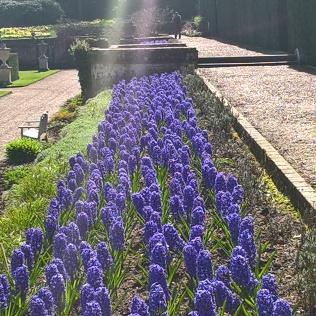 Hyacinth time...